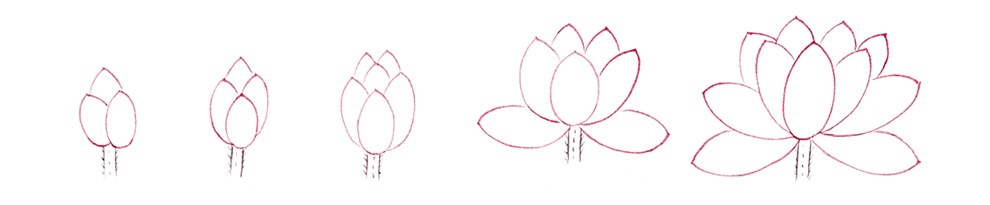 연꽃잎 그리기